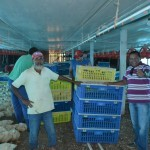 29510924 1477040615738243 5496383886231339008 o 150x150 - Só na Bença destaca instalação de Granja em Primavera de Rondônia