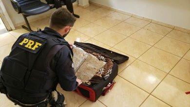 Boliviana é presa com mais de 5 quilos de cloridrato de cocaína