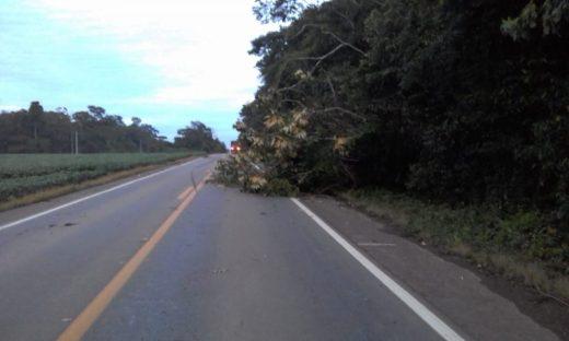 Morador de Vilhena morre após colidir de frente com carreta na BR-174 há 30 quilômetros de Vilhena