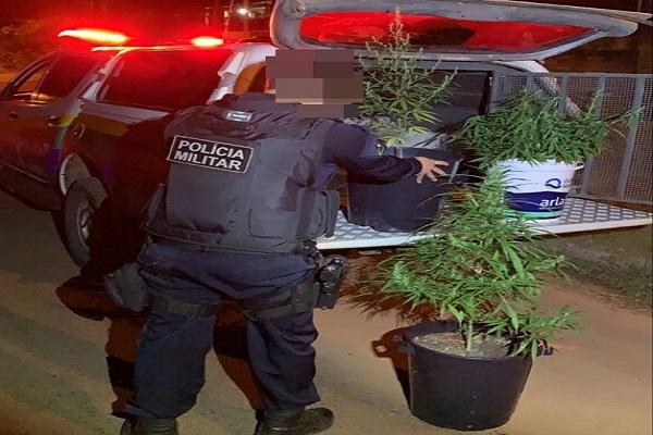 Polícia Militar recebe denúncia de veículo com drogas e acaba descobrindo plantação de maconha em Espigão do Oeste