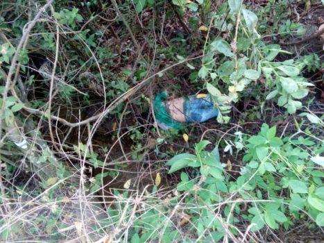 Quatro pessoas de Pimenteiras morrem em grave acidente na BR-364 provocado por animal na pista