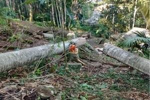 Homem morre ao ser atingido por árvore durante derrubada em Rondônia