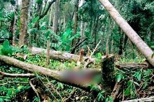 Trabalhador Braçal morre ao ser atingido por árvore