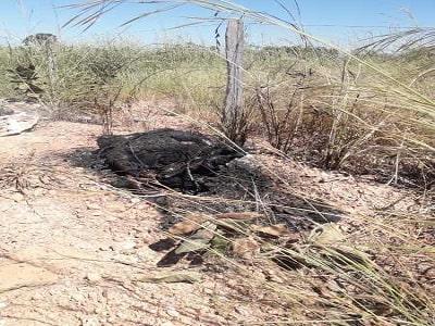 Corpo em chamas é encontrado por ciclistas na beira de estrada; Imagens fortes