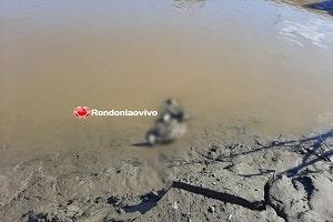 Ossada humana é encontrada no rio Madeira em Porto Velho