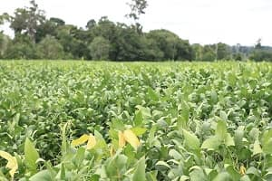 Rondônia registra aumento de 13,8% na área plantada de soja e 8,1% na produção